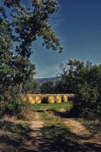 Sotillo del rincón - Soria