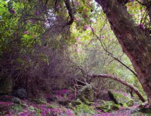 Retoque Digital | El Bosque encantado de Howth