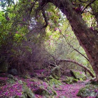 """Retoque digital de """"El Bosque encantado de Howth"""""""